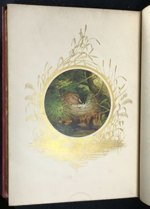 Feathered Favourites. Twelve coloured pictures of British Birds, from drawings by Joseph Wolf.