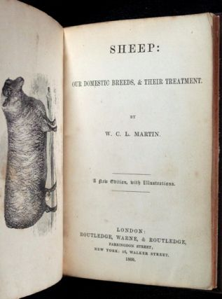 Sheep: Our domestic breeds, & their treatment.